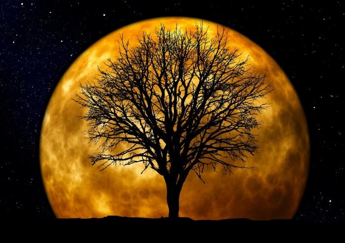 tree-66464_1920