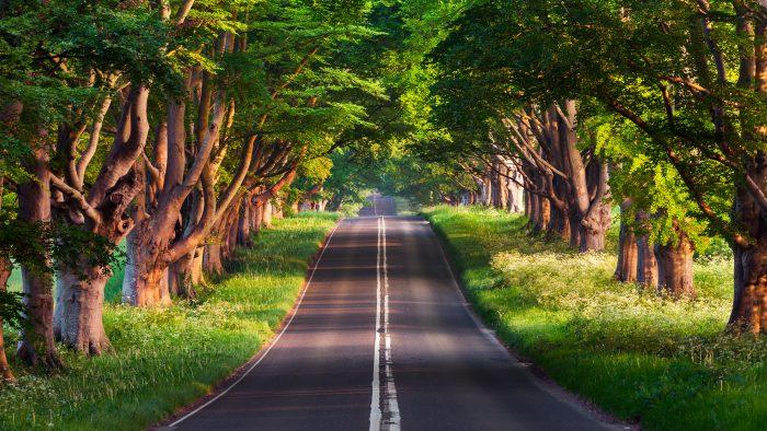 Doğa-yol